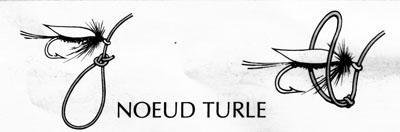 905_noeud_turtle.jpg